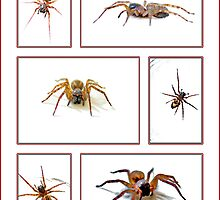 Spiders by Epicurian