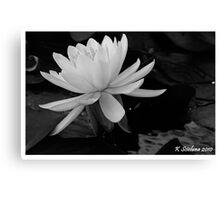 b/w lily Canvas Print
