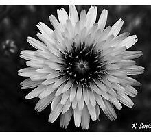 b/w daisy by bluetaipan