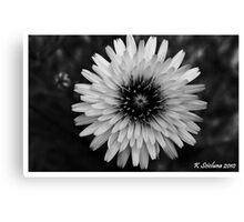 b/w daisy Canvas Print