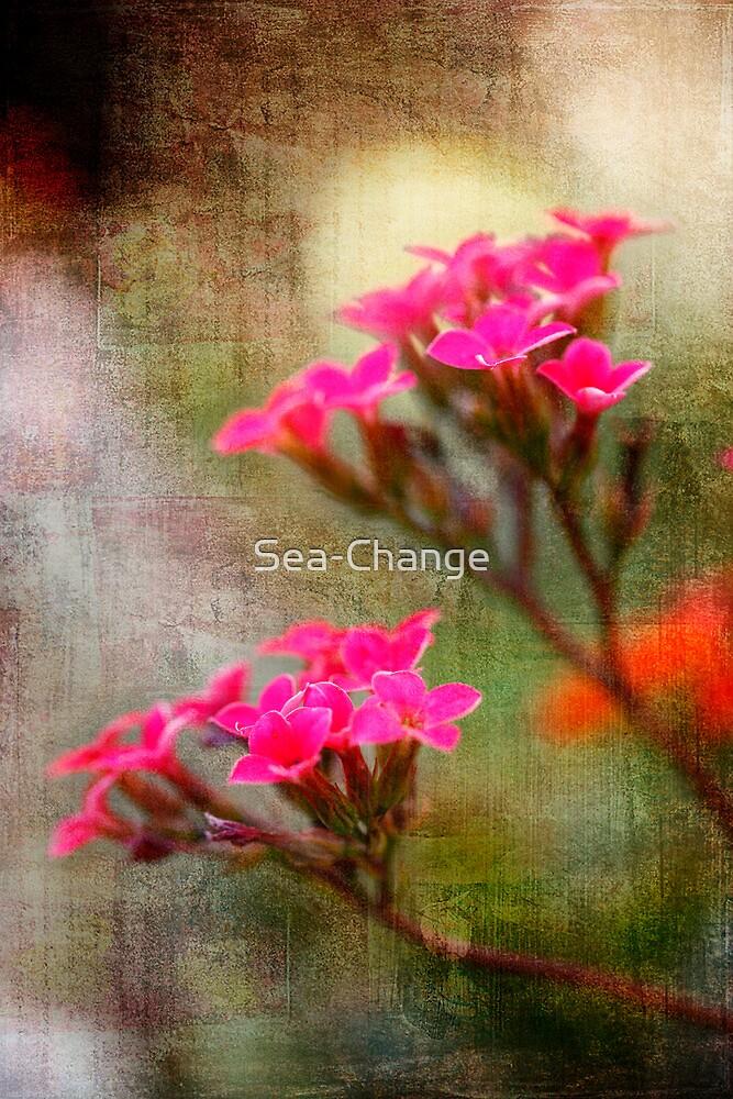 Dream by Sea-Change