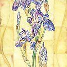 Retro Iris  by Forestedge