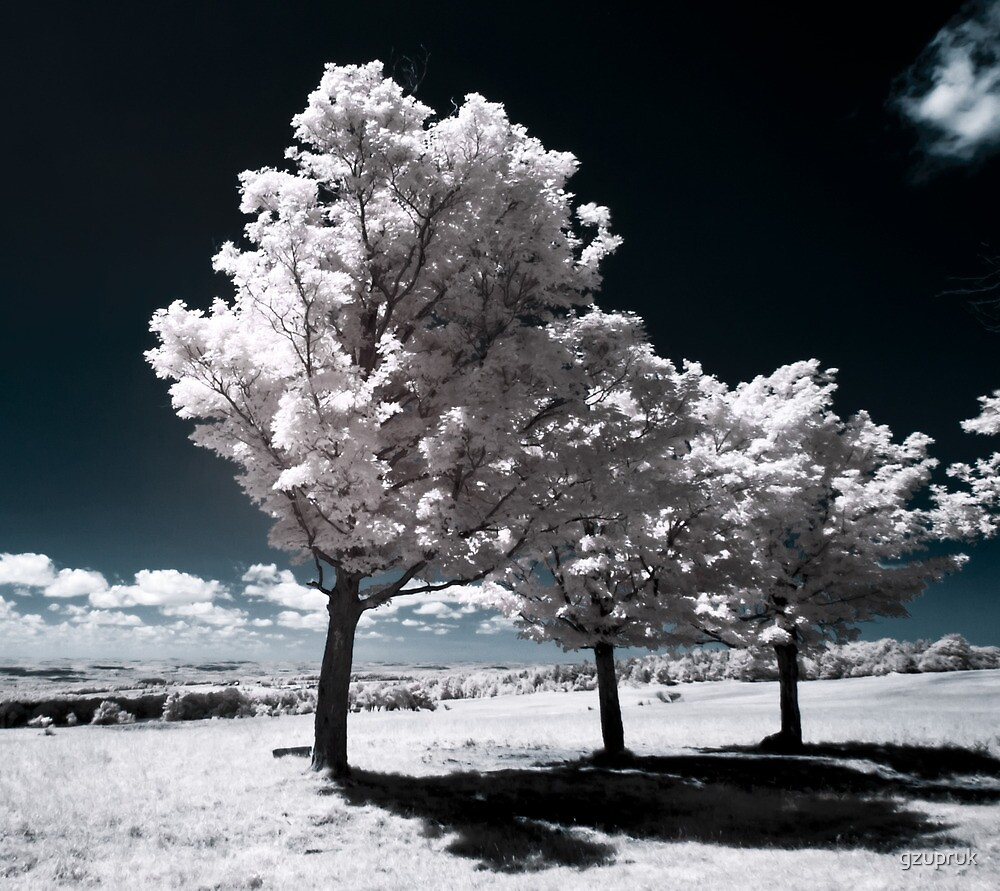 Seneca Trees by gzupruk