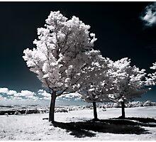 Seneca Trees Photographic Print