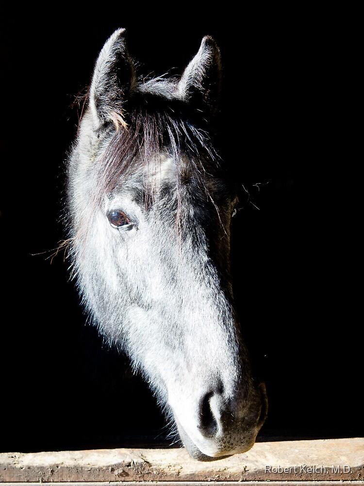 The comtemplative horse by Robert Kelch, M.D.