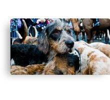 Well it is boxing day! and can not always look ones best Canvas Print