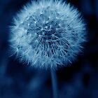 Blue Dandelion by redown