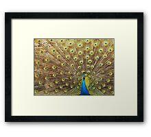 Peacock 3 Framed Print