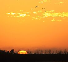 Rising Sun by kathy s gillentine