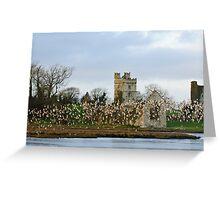 Dunlin rising at Bannow Bay, County Wexford Greeting Card