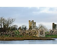 Dunlin rising at Bannow Bay, County Wexford Photographic Print