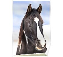 Winter Equine Poster