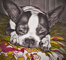 Sleepy Boston  by Pam Humbargar