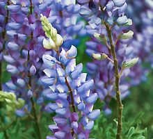 Dancing Lupines - Spring In Central California by Ram Vasudev