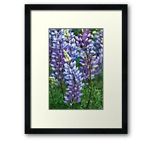 Dancing Lupines - Spring In Central California Framed Print