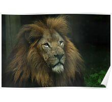 King Amongst Beasts Poster