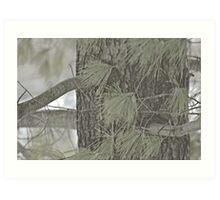 a beautiful pine blur... Art Print