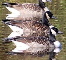 Canadian Geese Ready for Fall by Kay Reynolds