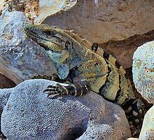 Herbivorous Genus by Lanis Rossi