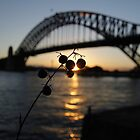 Sunset Sydney Harbour Bridge by renekisselbach