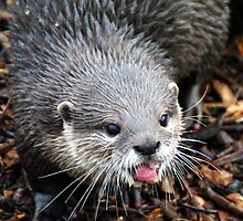 Otter by Photography  by Mathilde