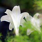 Floral Trumptet Flairs by Deborah Crew-Johnson