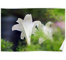 Floral Trumptet Flairs Poster