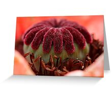 poppy head Greeting Card