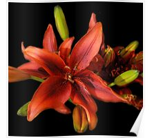 Tantalizing Tiger Lily Poster