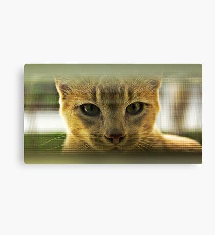 Community Cat Canvas Print