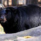 Black Bear by Lolabud
