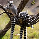 Lemurs by Lolabud