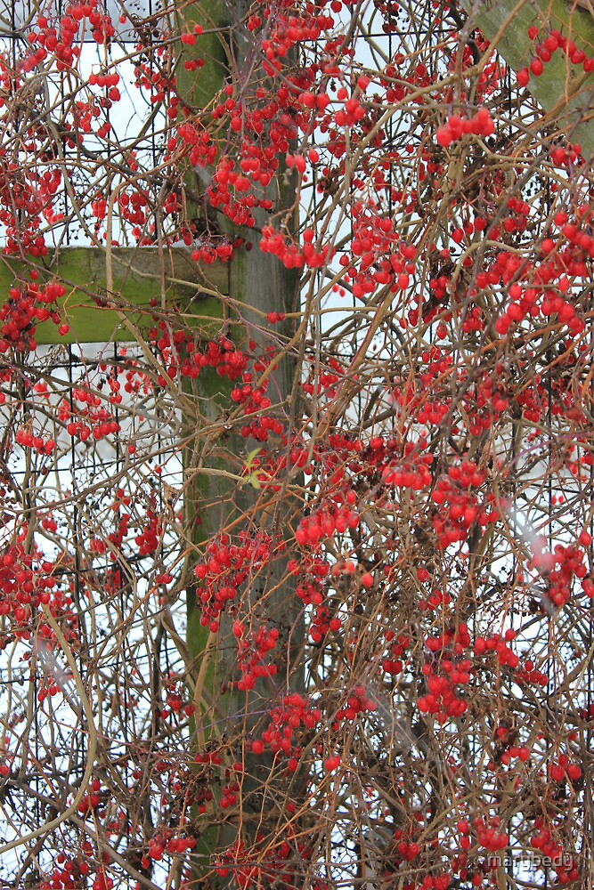 Berries and Old Fence 5 by marybedy