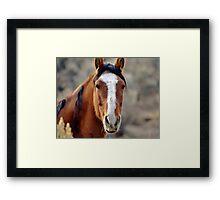 Wild Horses in Palomino Valley Nevada Framed Print