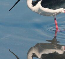 Black-necked Stilt - Huntington Beach California Sticker