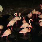 DISNEY FLAMINGOS by Debbie Robbins