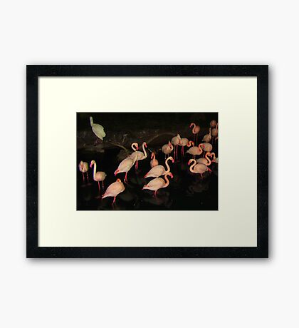 DISNEY FLAMINGOS Framed Print