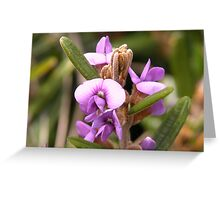 Mt Wills flower, North East Victoria, Australia Greeting Card