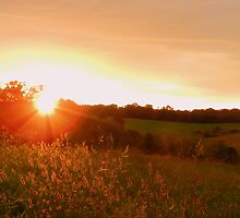 Sunset in the Golden Grass by TrendleEllwood