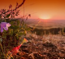 Bluebell Sunset by jphphotography