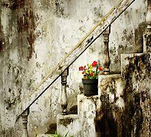 .Vintage. by werxj