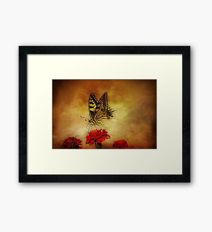 Open Your Wings And Fly Framed Print