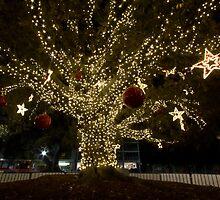 Moreton Bay Fig Tree - Fremantle, W.A. by Sandra Chung
