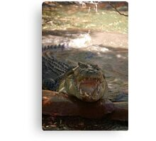 saltwater croc Canvas Print