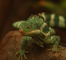 Iguana Lizard by RobsVisions