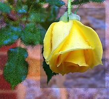 Rose by RobsVisions