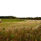 Hay Bales of Argyle Shore Prince Edward Island by Nadine Staaf
