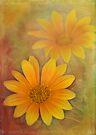sunshine in winter by Teresa Pople