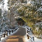 Centerparcs in the Snow 01 by James Kowacz
