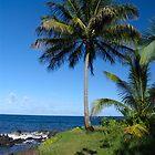Hawaii by Francois Ward